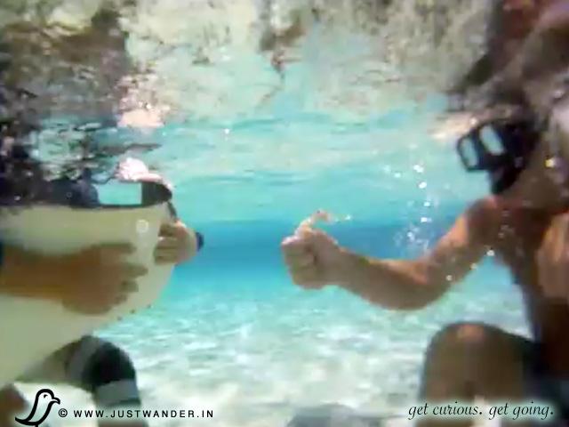 PIC: Stingray City, Grand Cayman Islands - Bill feeding a stingray squid