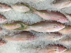 tilapia(0.0), perch(0.0), cod(0.0), forage fish(0.0), tilefish(0.0), bonito(0.0), capelin(0.0), sardine(0.0), milkfish(0.0), animal(1.0), fish(1.0), fish(1.0), seafood(1.0), oily fish(1.0), food(1.0),
