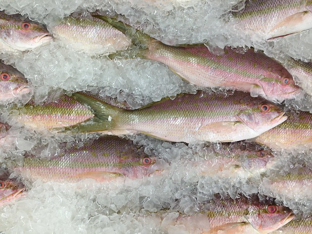 fish on ice spectral analysis