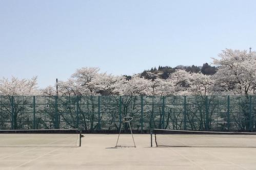 桜2014 : 鰍沢 大法師公園 舞い散る桜【動画】アリ
