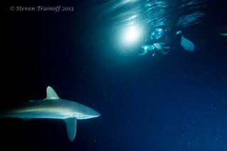Shooting Silky Sharks sans Sun