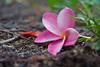 Flower on the ground