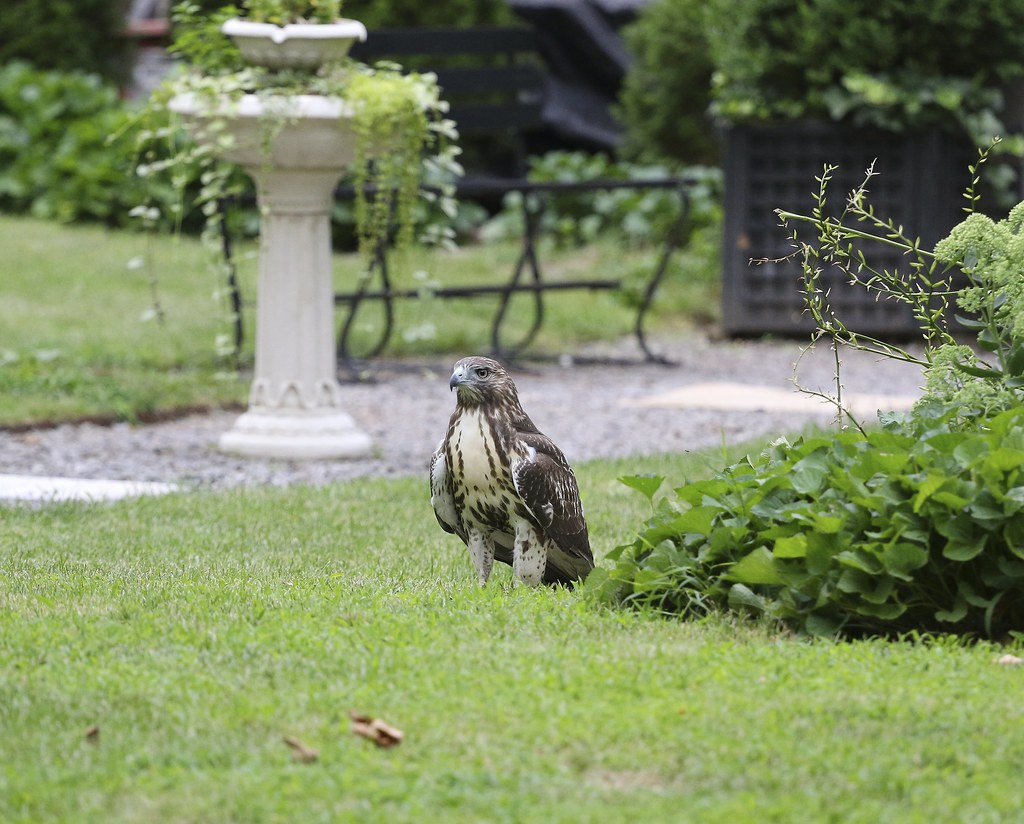 Fledgling in the Marble Cemetery
