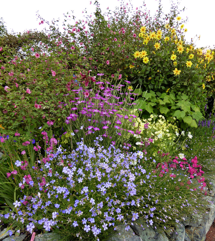 Annie's Annuals and Perennials - Retail and Online Nursery ...