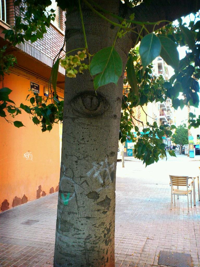 Tree Observer.
