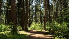 Big Trees 01