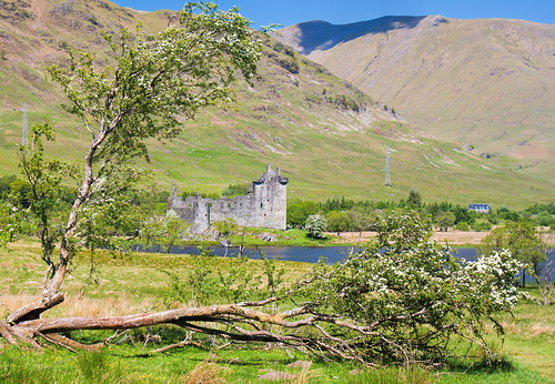 Kilchurn Castle #1 Tree Framed