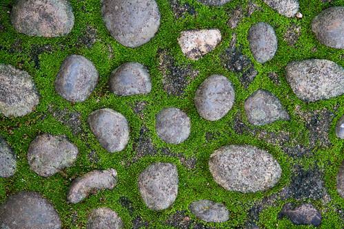 moss rocks stones