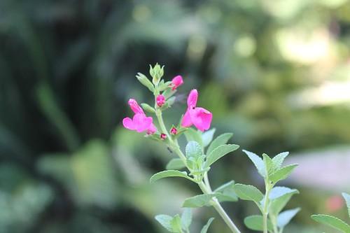 Orto botanico: fiori