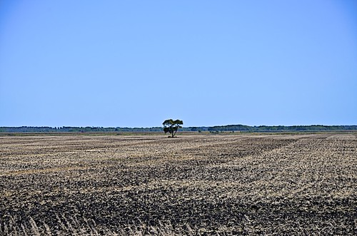 autumn trees sky canada field weather day herbst feld himmel manitoba clear bäume wetter grunthal