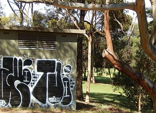 Graffiti Under a Tree