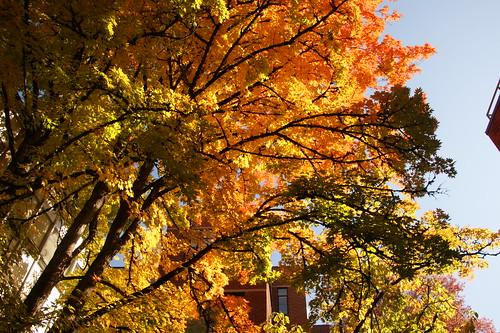 eugene fall autumn campus universityoforegon 2013 homecoming 500views