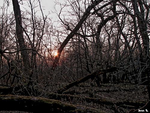 autumn trees light sunset sky sun green fall texture yellow canon outdoor