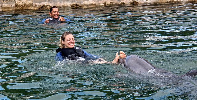 Swimming with Dolphins - Key Largo, Florida - push my feet dolphin trick