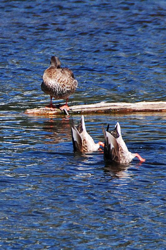 Scout Lake Nature Centre, Williams Lake, Cariboo, British Columbia, Canada
