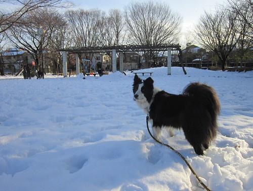 雪の公園を散歩 2014年2月9日16:05 by Poran111