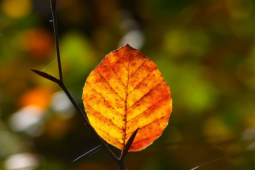 Illuminated Leaf