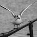 Edg_Res_Birds-21.jpg