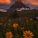 Surrounded by Ryan Dyar