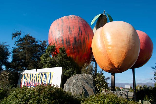 Giant Stone Fruit, Cromwell