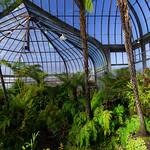 Obrázek Belle Isle Conservatory u Windsor. plants detroit conservatory belleisle annascrippswhitcomb annascrippswhitcombconservatory