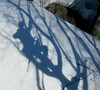 Tree (Climbing) Shadows by prairie_girl76