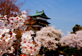 A castle and a cherry tree