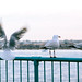 The Seagulls by Orz_PX