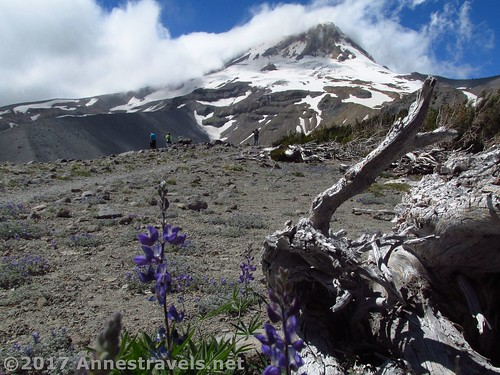 Hiking on Gnarl Ridge in Mt. Hood National Forest, Oregon
