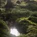 forest reflection by dovlindphoto