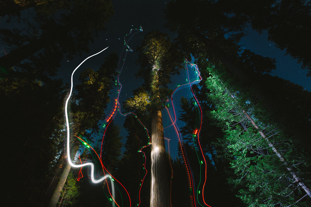 Drone Light Painting Giant Sequoias