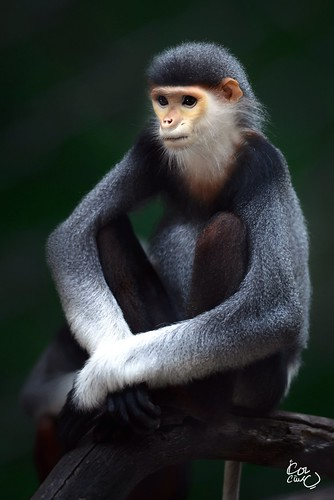 Meditating Monkey! by Ahmed-Dashti