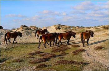 Huisje Huren Oud En Nieuw Waddeneilanden