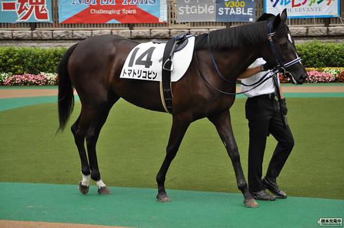 5R 2歳新馬 トマトリコピン パドック