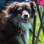 100 Dog Strangers: 06/2013