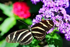 Aveda Butterfly Garden