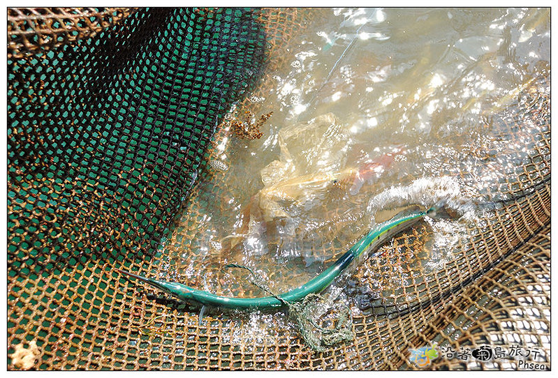 2013元貝休閒漁業_32