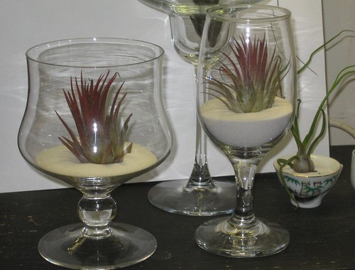 display sandwine