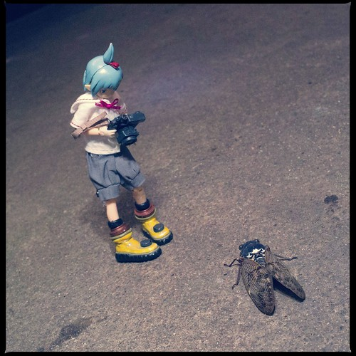 Cicada VS SIGURE