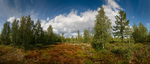 wood travel summer sky panorama terrain cloud plant color tree green tourism nature grass closeup zeiss forest season landscape leaf bush flora scenery day view bright hyperfocal russia outdoor background wildlife north scenic sunny fresh clean explore valley lee nd nordic birch wilderness polar northern botany russian tundra taiga moist distagon uncultivated carlzzeiss distagont2821 xritecolorcheckerpassport czdistagon sekonic758 czdistagoncom
