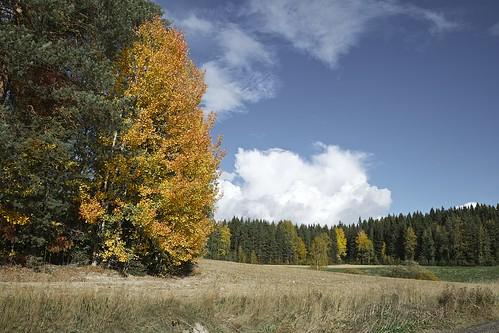 autumn sky color tree nature pine clouds forest suomi finland landscape leaf nikon europa europe sunny hämeenkyrö maisema syksy lehti d800 mänty 2013 väri
