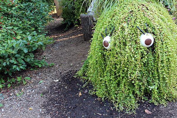 Spooky Bush
