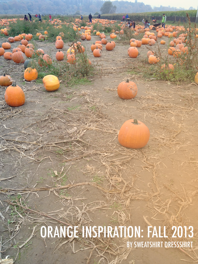 orange inspiration, pumpkin patch, snohomish pumpkin patch