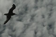 Gull 0813 8309