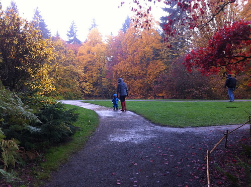 Puddles at the Arboretum
