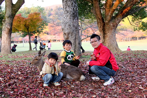 Autumn, Nara KoenShika-san