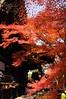 2013 Kyoto Momiji