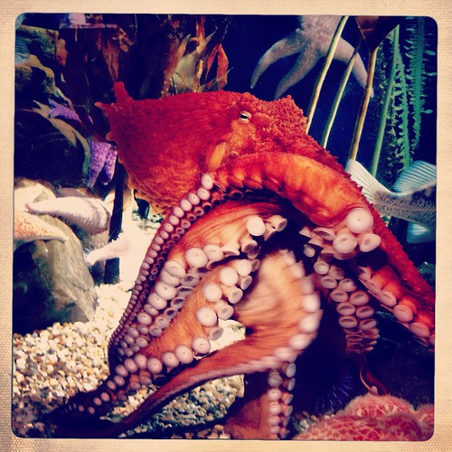 Octopus (5/365) by elawgrrl