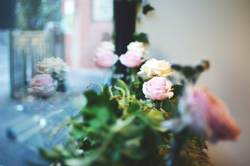 roses january 2014