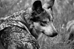 Zoológico Los Coyotes
